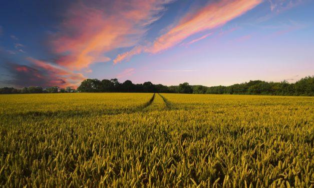 Ecole-chercheurs – LabEx BASC  «Construire un collectif interdisciplinaire en Agroécologie» – 22-25/01/2018