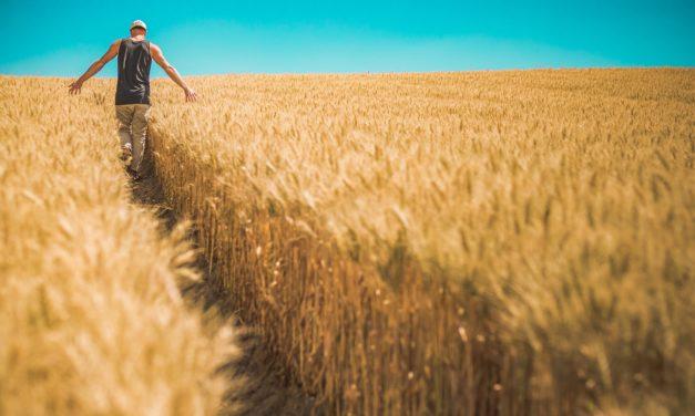 Appel à articles – Nouvelle Revue du Travail – «Travailler dans l'agriculture» – 12/12/2019