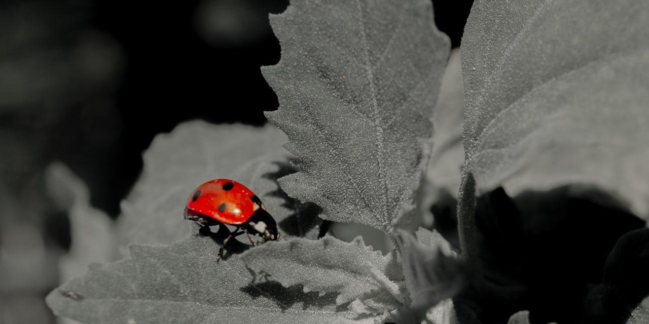 Appel à projets transnational BiodivClim « Biodiversité et Changement Climatique » – 5/11/2019